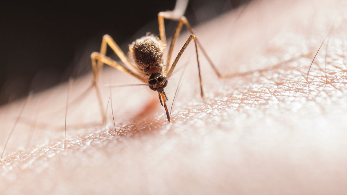 Public health officials in Northern Indiana said the virus was found in three horses and a...