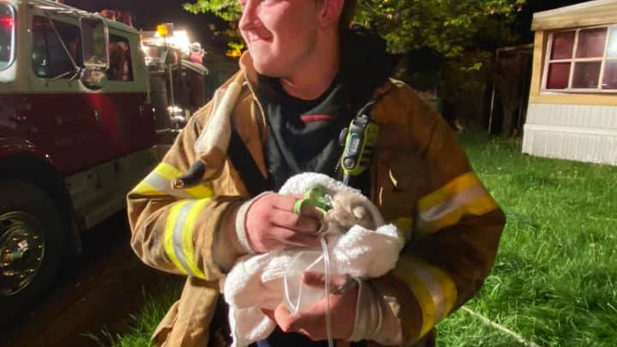 A Willard firefighter administers oxygen to a tiny kitten pulled from a mobile home fire Tuesday.