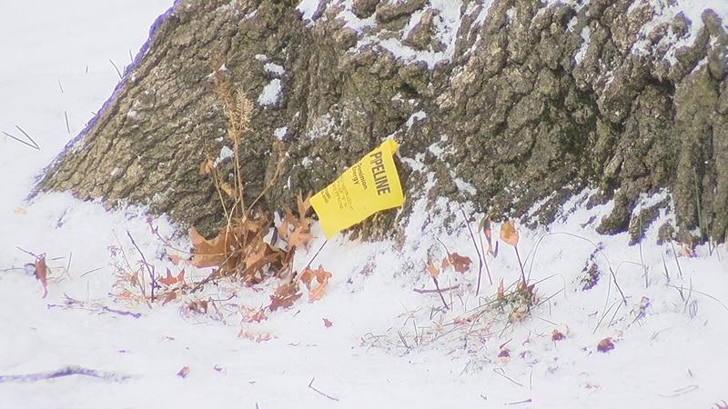Gas line under tree in Cleveland