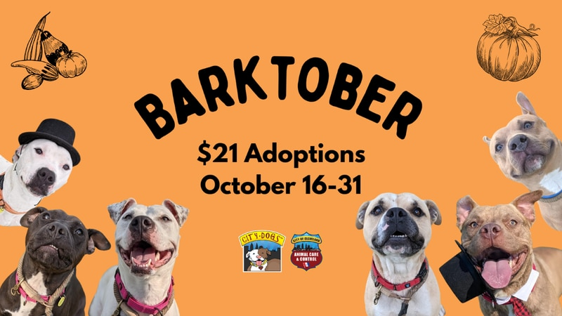 Clear full kennels at City Dogs Cleveland with $21 adoptions this 'Barktober'