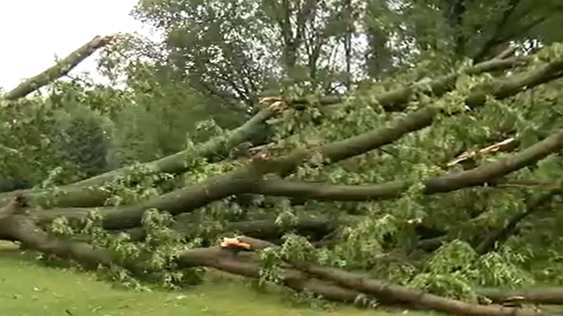 New emergency weather alert credited for saving Westlake woman's life as trees crash down on...