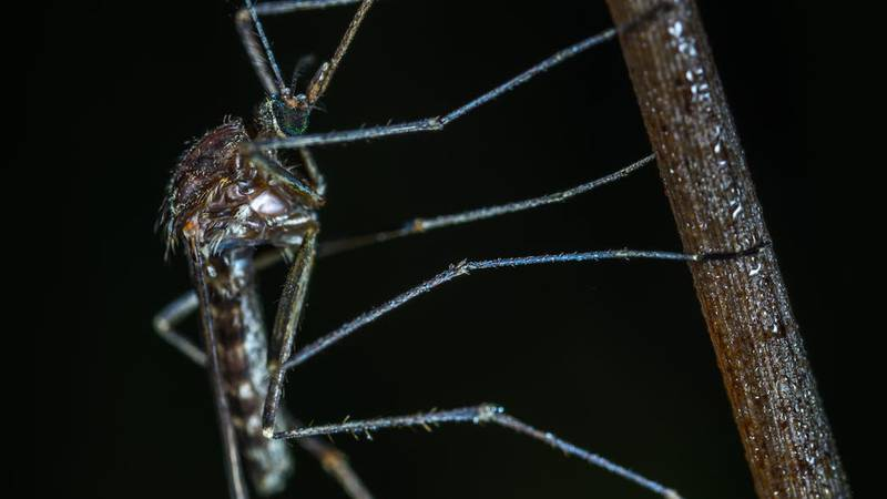 West Nile Virus was detected in a mosquito in Massac County, Illinois (Source: Pexels)