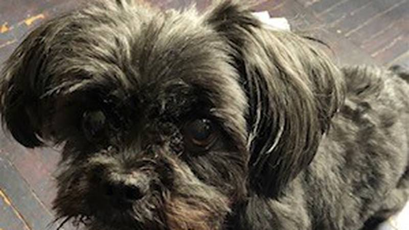 There is a $1,000 reward for the safe return of Kaylie The Dog who went missing from a yard on...