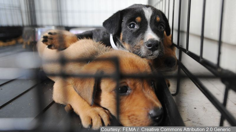 The Cleveland Animal Protective League is offering a special deal on dog adoptions for Father's...