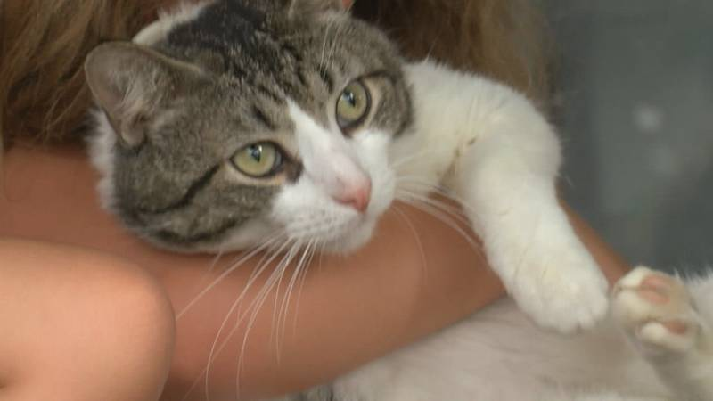 One of the cats belonged to a family whose cat had been missing for more than three months.