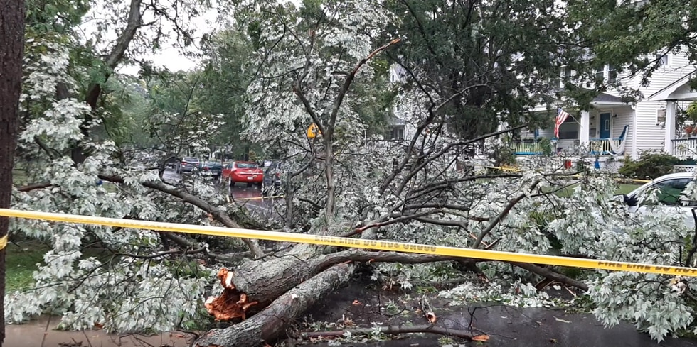 Aug. 11, 2021 storm damage: Bayes Avenue in Lakewood