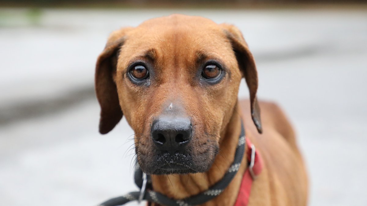 Rebel is doing much better and will available for adoption!