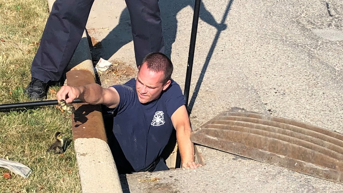 Streetsboro fire department responded to a call about ducklings that fell into a grate.