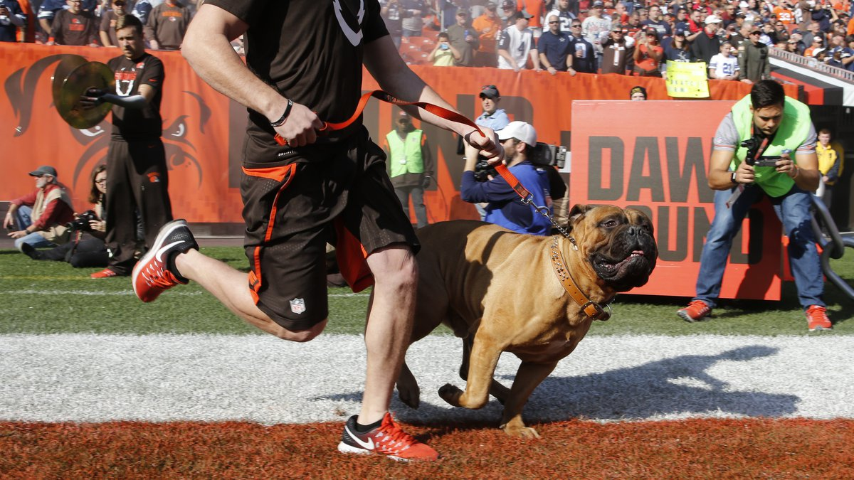 The Cleveland Browns mascot dog Swagger is led onto the field before an NFL football game...