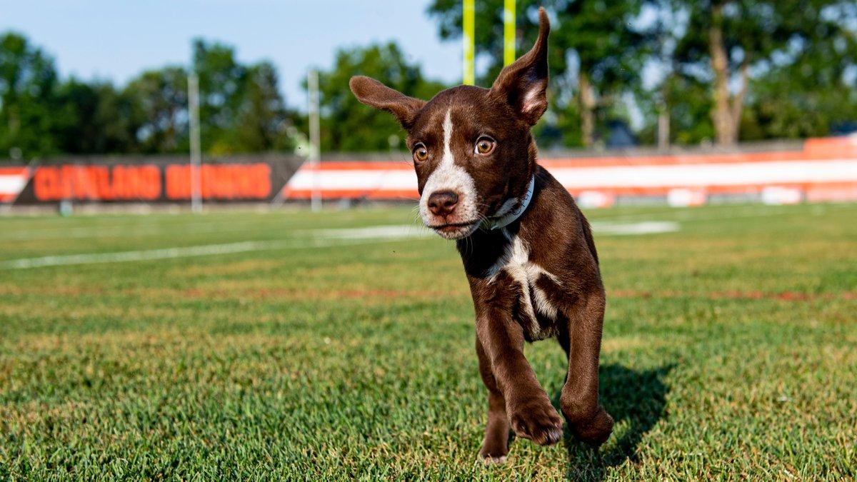 Puppy Pound (Source: Cleveland Browns)