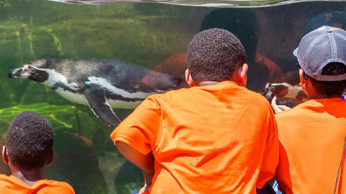Akron Zoo offering free admission if you wear orange for Inclusion Day on Mar. 2 (Akron Zoo)