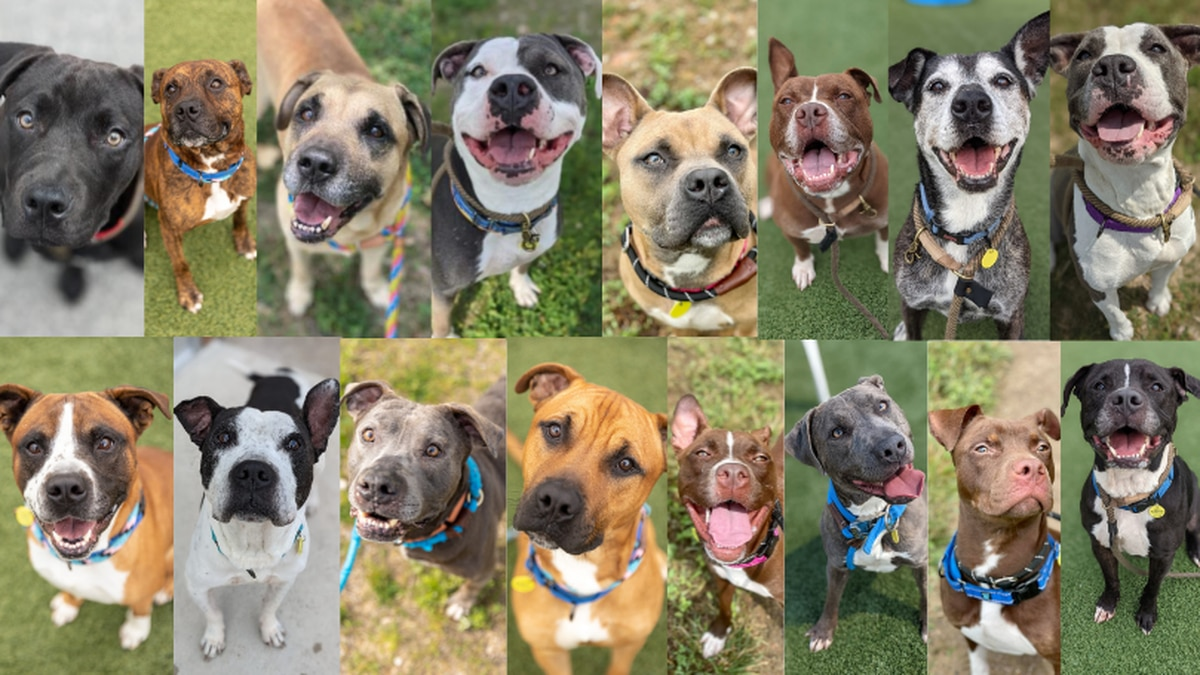 City Dogs Cleveland reduces adoption fees to find 'furever' homes for full kennel