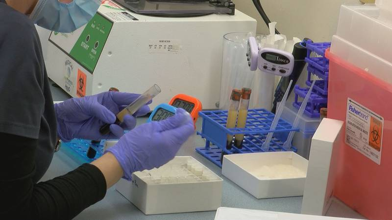 An employee of MedPharmics processes blood samples Monday taken as part of a study of a Pfizer...