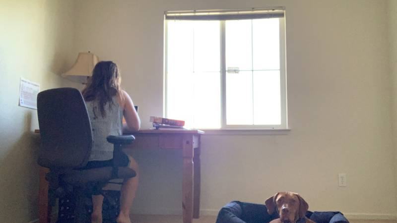 With everyone working from home, Grossman says people are messing up their pets' routines. She...
