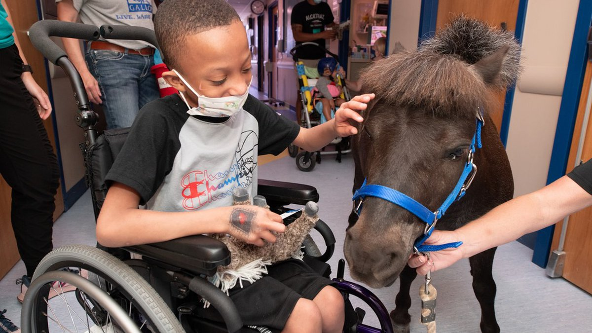 Willie Nelson the mini therapy horse visited the Akron Children's Hospital