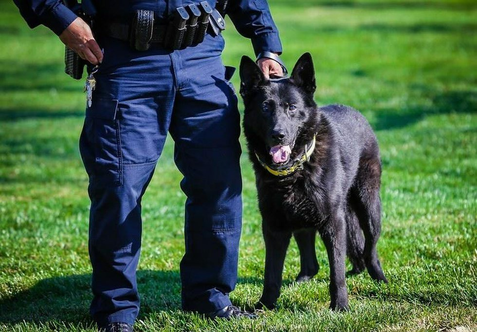 Walton Hills Police K9 Aro passes away after his retirement