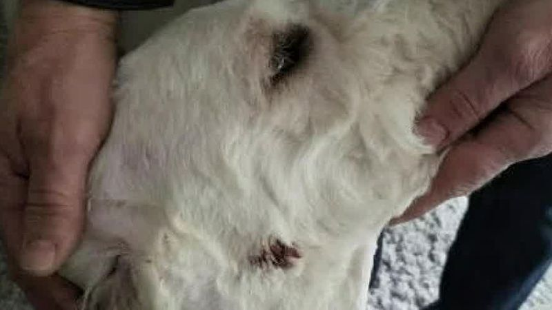 Cleveland dog owners claim groomer injured their dogs