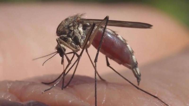 A wet spring will likely lead to a familiar problem for East Texans: mosquitoes.