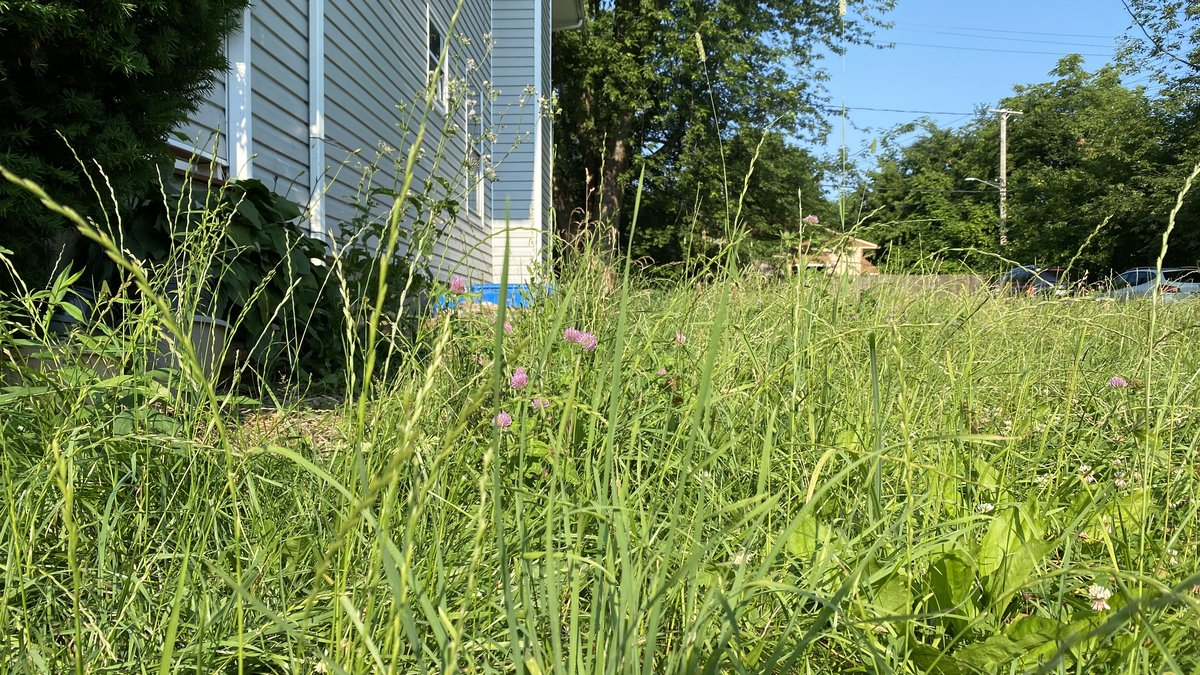 Grass on a vacant lot on West 89th Street hadn't been cut in two months by the City of Cleveland