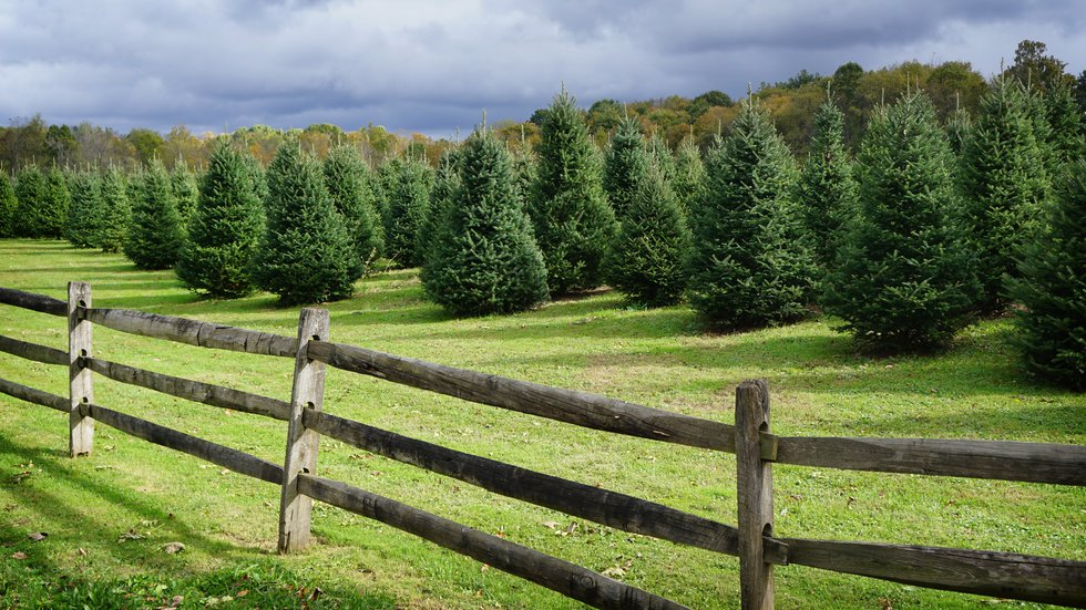 Sugar Pines Christmas Tree farm is a year long effort. While most visitors only think about...