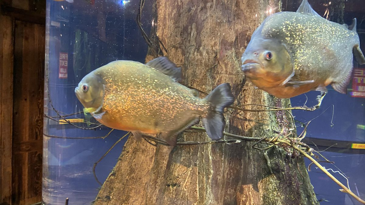 The Greater Cleveland Aquarium becomes the latest Cleveland landmark to reopen but with timed...