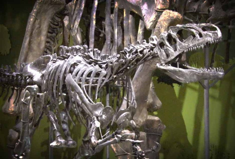 The Cleveland Museum of Natural History has some unique dinosaur exhibits. (Source: WOIO)
