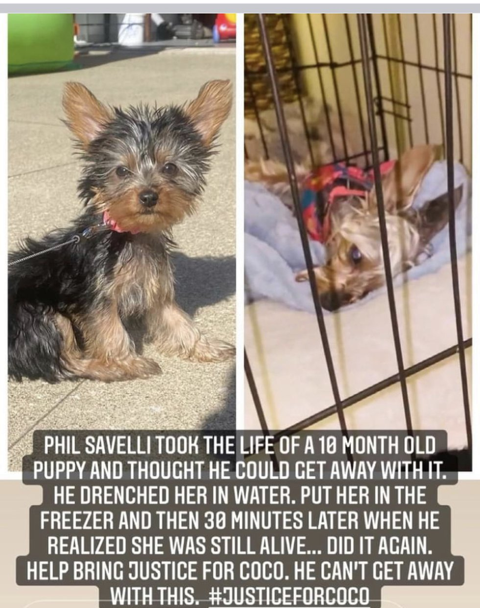 #JusticeForCoco: Police arrest Phil Savelli for animal cruelty after 10-month old puppy was...
