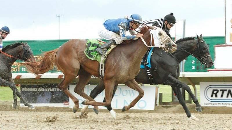 Florida-bred East Hall won Thistledown's 2014 Ohio Derby. (Source: Thistledown)