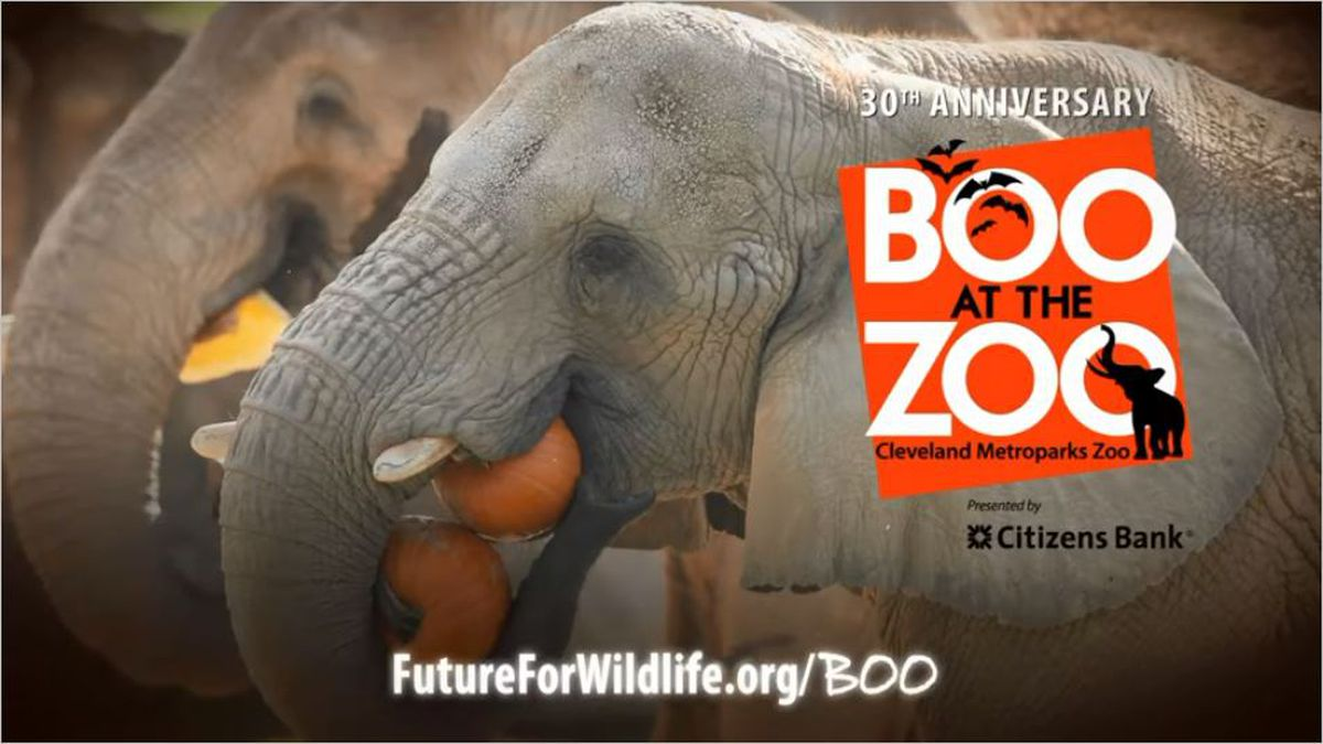 Boo at the Zoo 2019
